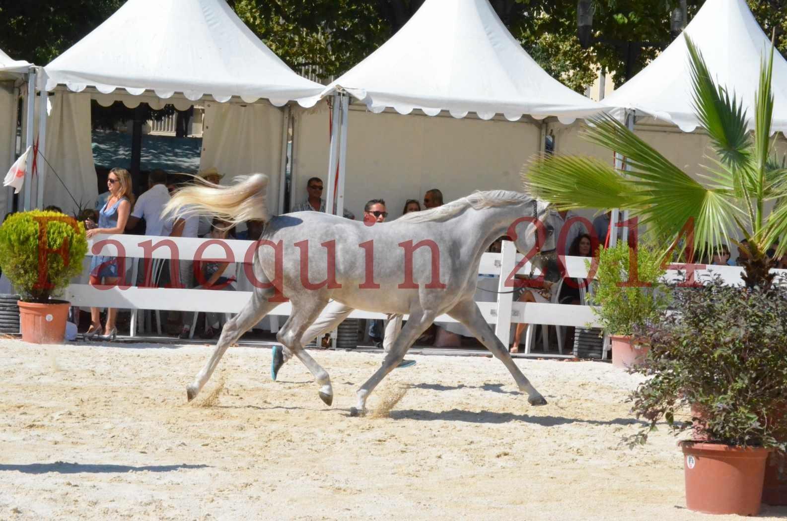 Concours national de Nîmes 2014 - Championnat Femelles Juniors - VOLODIA DE LAFON - 11