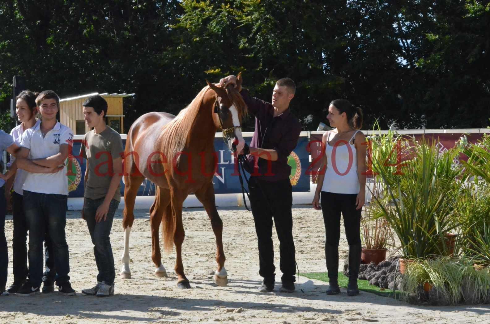 Championnat de FRANCE 2014 - Amateurs - SELECTO IBN SAMAWI - 083