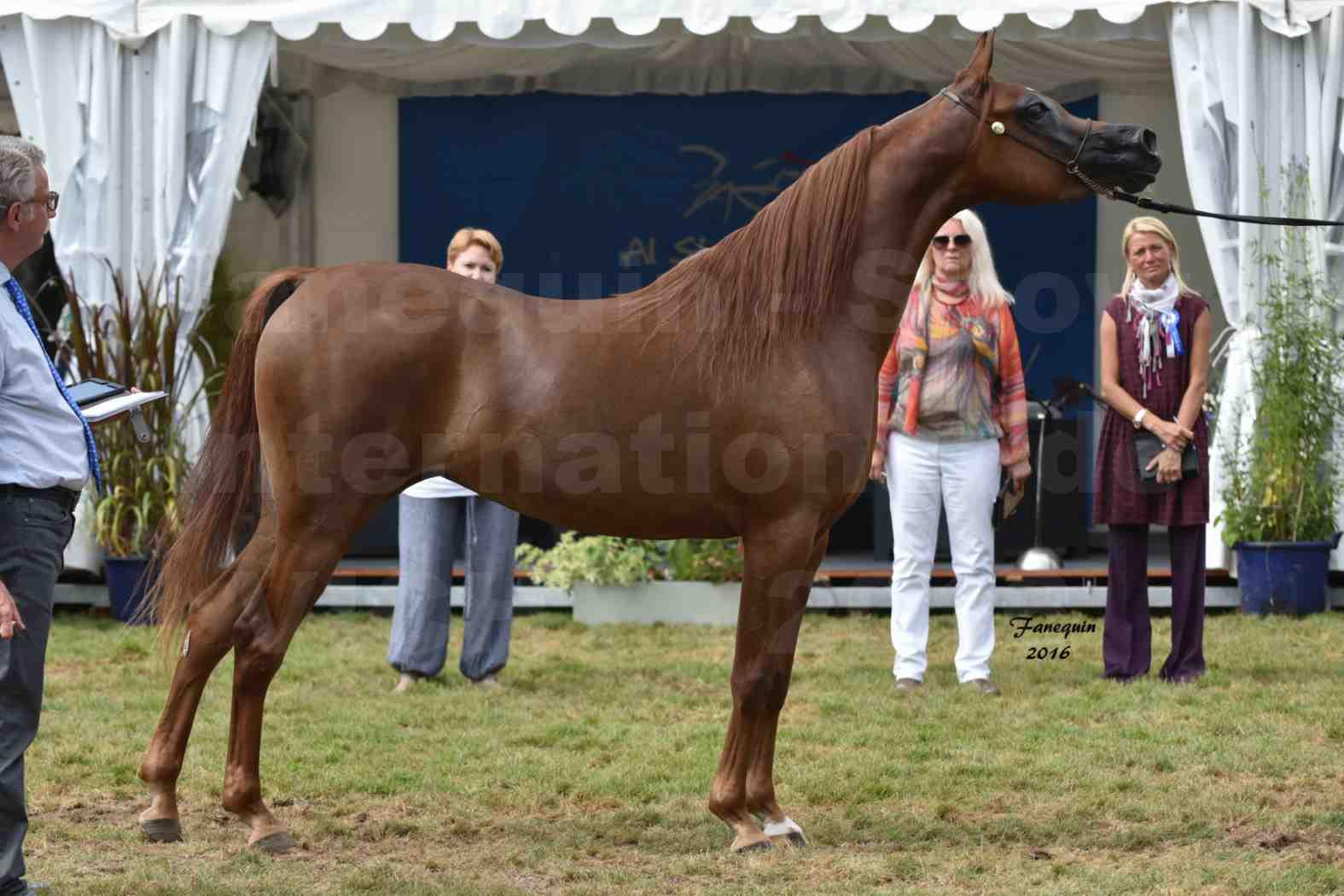 International Arabian Horse Show B de VICHY 2016 - PEARL DE DJOON - Notre Sélection - 40
