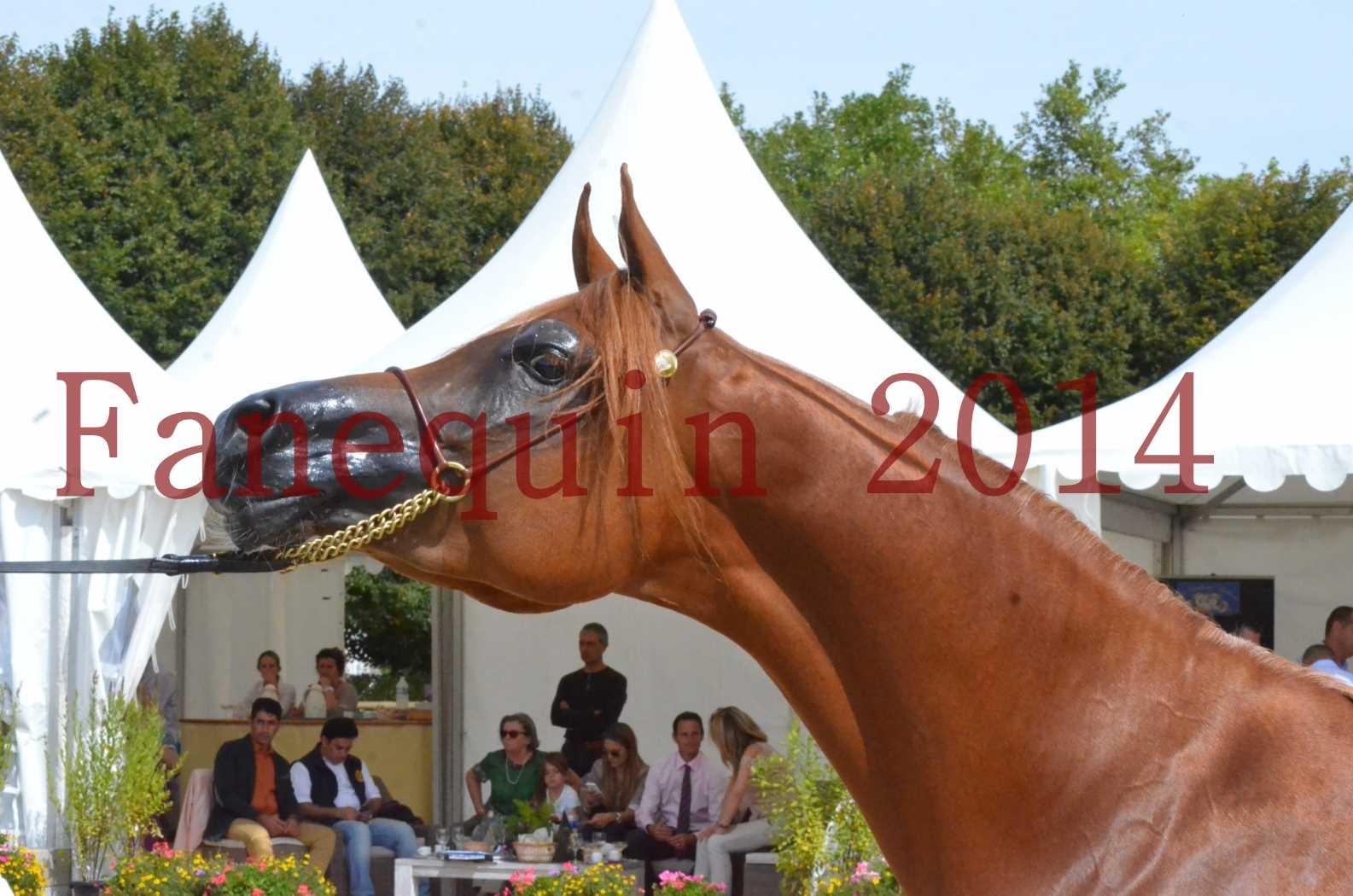 CHAMPIONNAT DE FRANCE 2014 A POMPADOUR - Championnat - LUTFINAH JA - 48