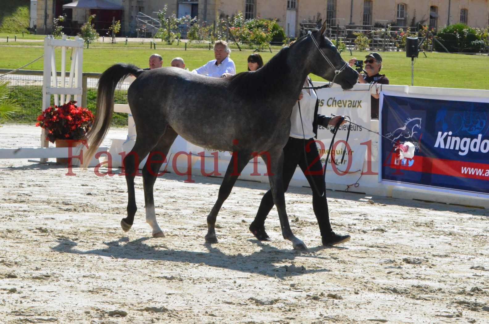 Championnat de FRANCE 2014 - Amateurs - CHTI KAID D'AUBIN - 28