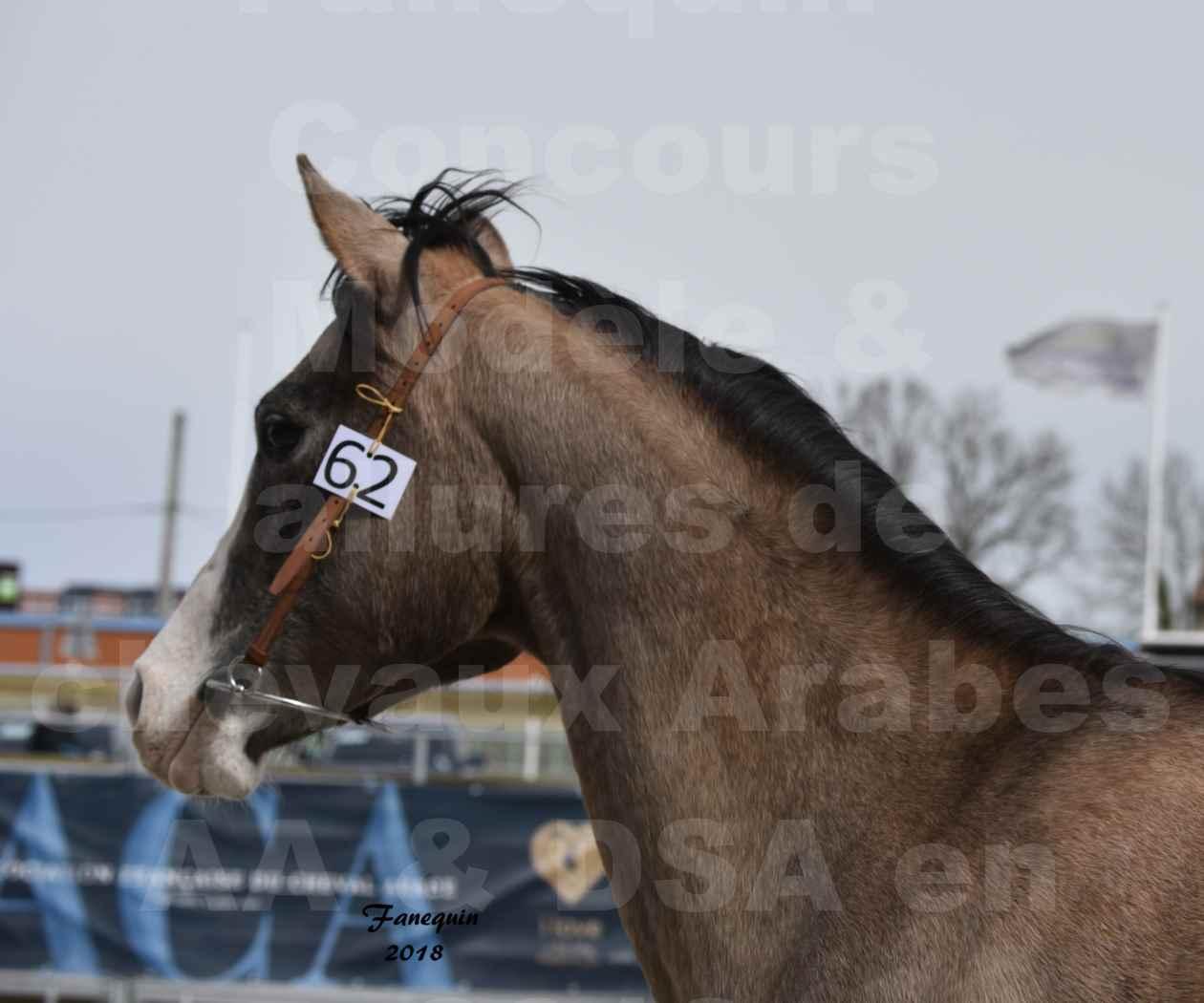 Concours d'élevage de Chevaux Arabes - Demi Sang Arabes - Anglo Arabes - ALBI les 6 & 7 Avril 2018 - FLORIA DU PUECH - Notre Sélection - Portraits - 3