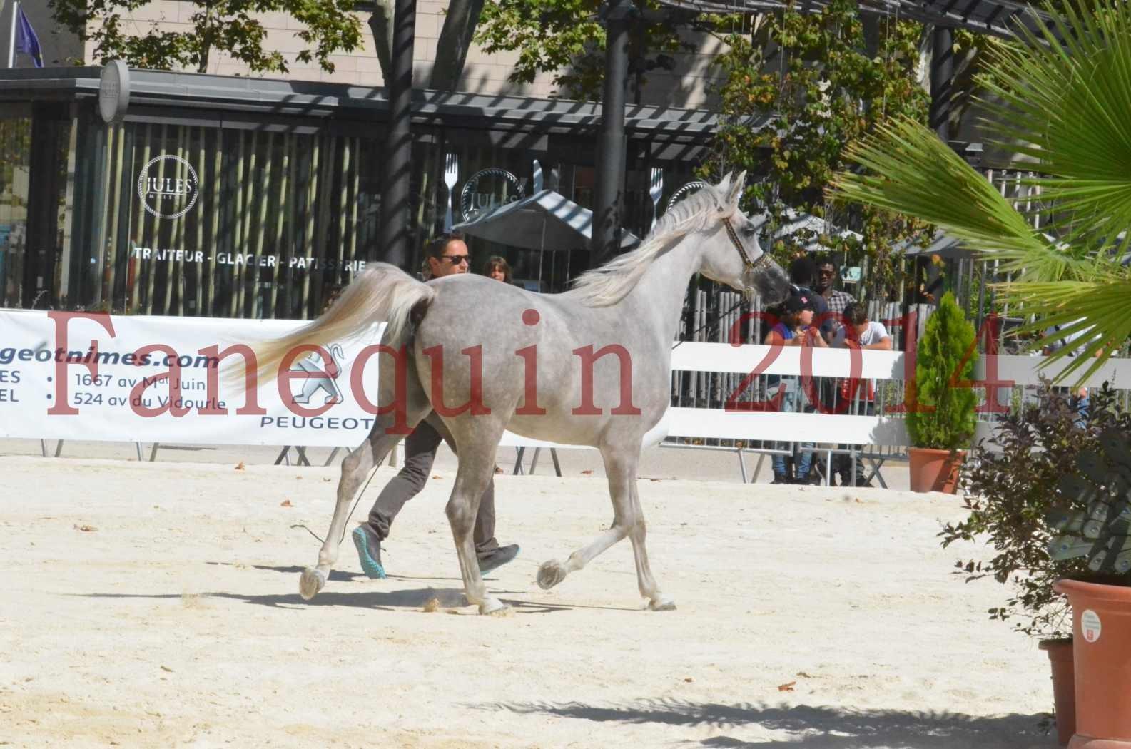 Concours national de Nîmes 2014 - Sélection - VOLODIA DE LAFON - 02