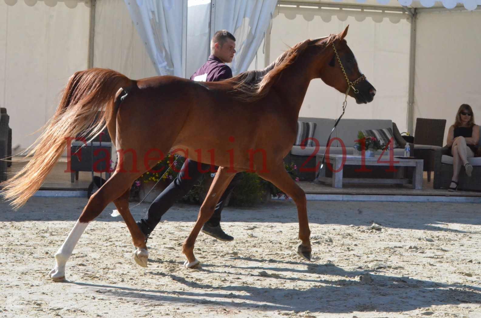 Championnat de FRANCE 2014 - Amateurs - SELECTO IBN SAMAWI - 028