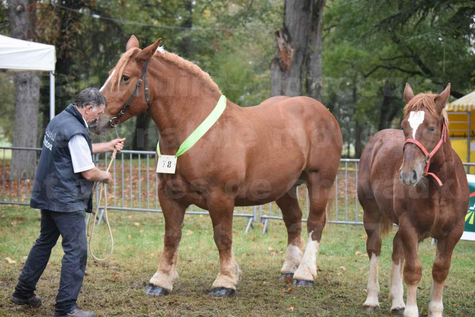 Concours Régional de chevaux de traits en 2017 - Trait BRETON - Jument suitée - ROYALE DE MARS - 01