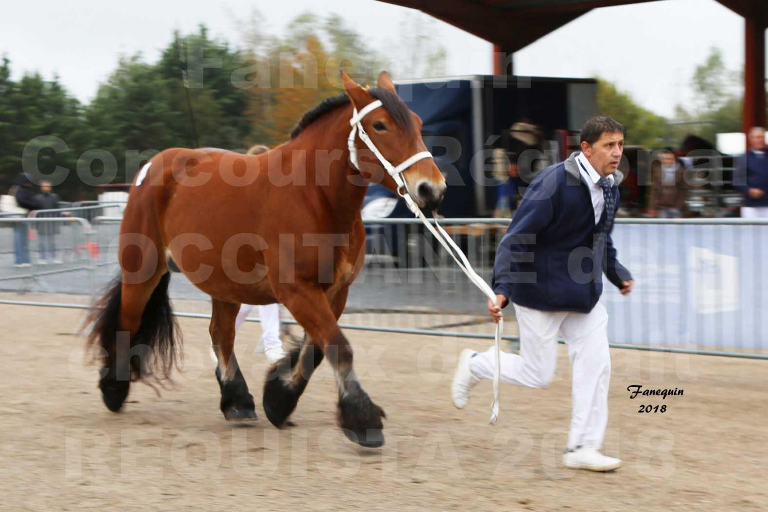 Concours Régional OCCITANIE de chevaux de traits à REQUISTA - COMETE DE GRILLOLES - 2