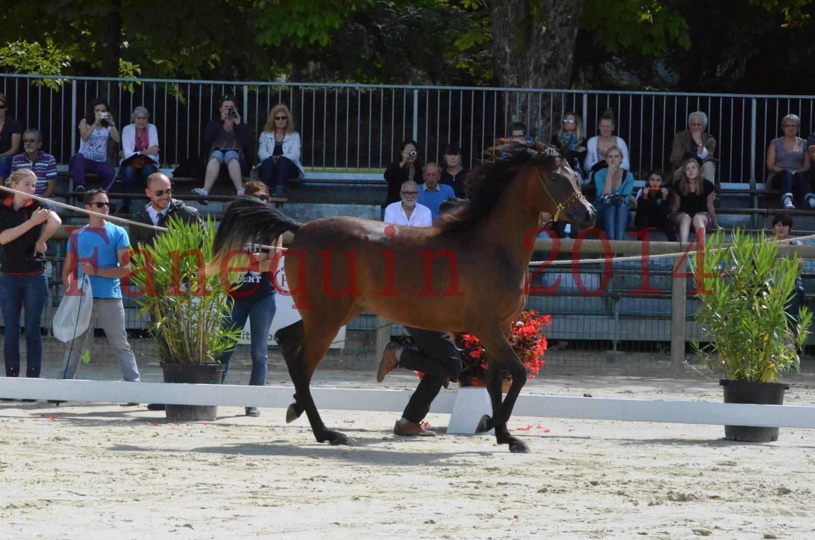 Championnat de FRANCE 2014 - Amateurs - KAL'ELLE D'ELHORIA - 39