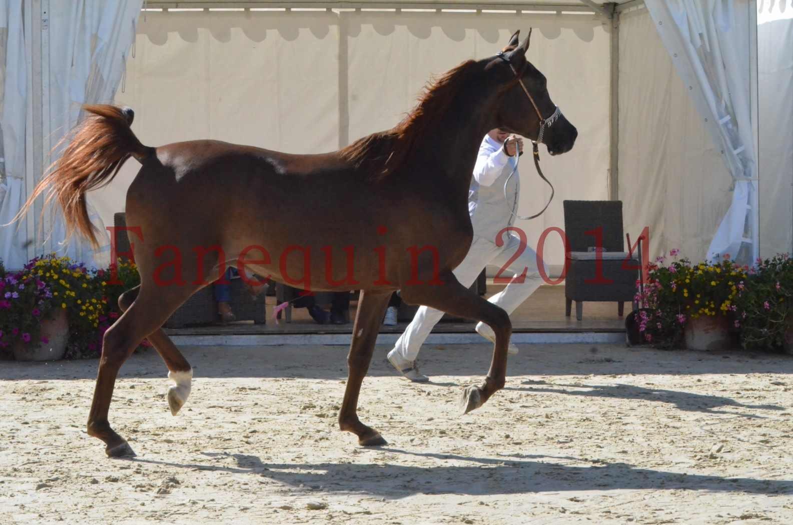 Championnat de FRANCE 2014 - Amateurs - LAMAL - 18