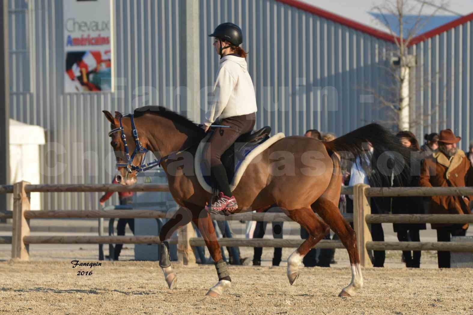 Cheval Passion 2016 - Présentation extérieure de chevaux Arabes montés - 04
