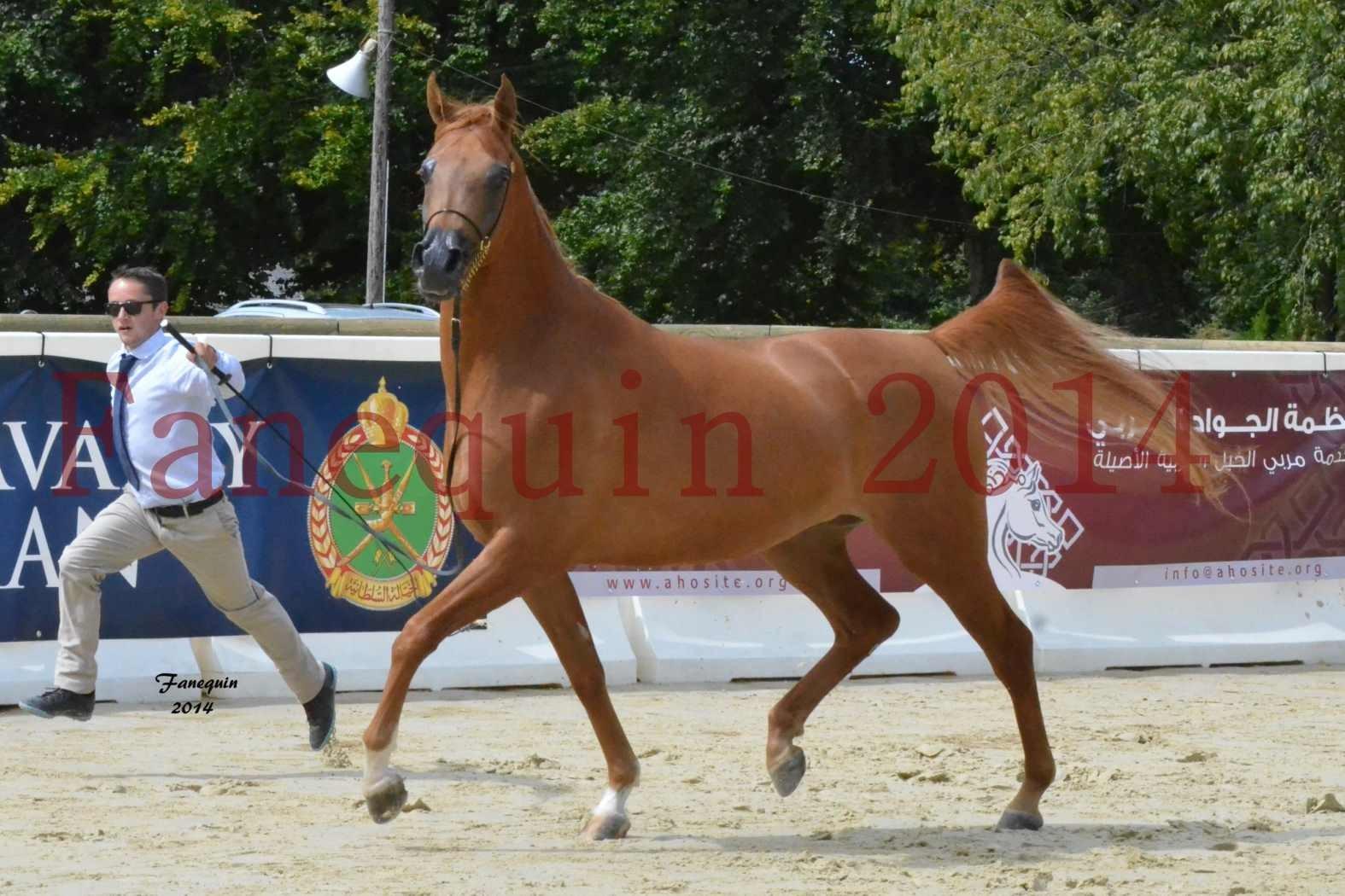 CHAMPIONNAT DE FRANCE 2014 A POMPADOUR - Notre Sélection - LUTFINAH JA - 27