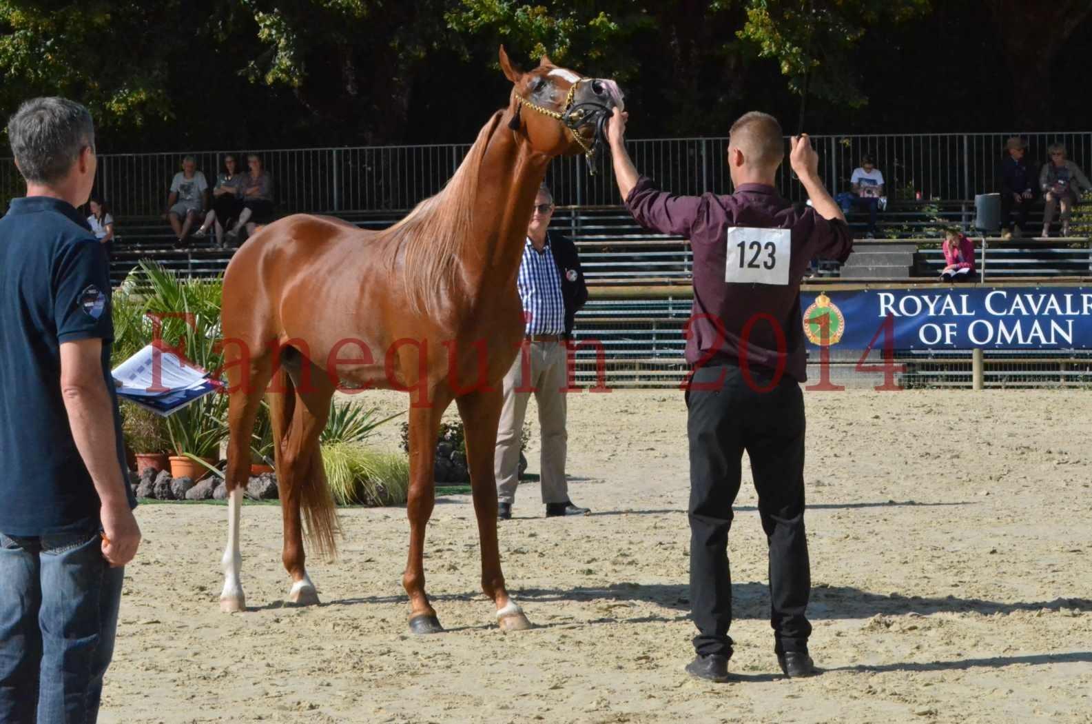 Championnat de FRANCE 2014 - Amateurs - SELECTO IBN SAMAWI - 069
