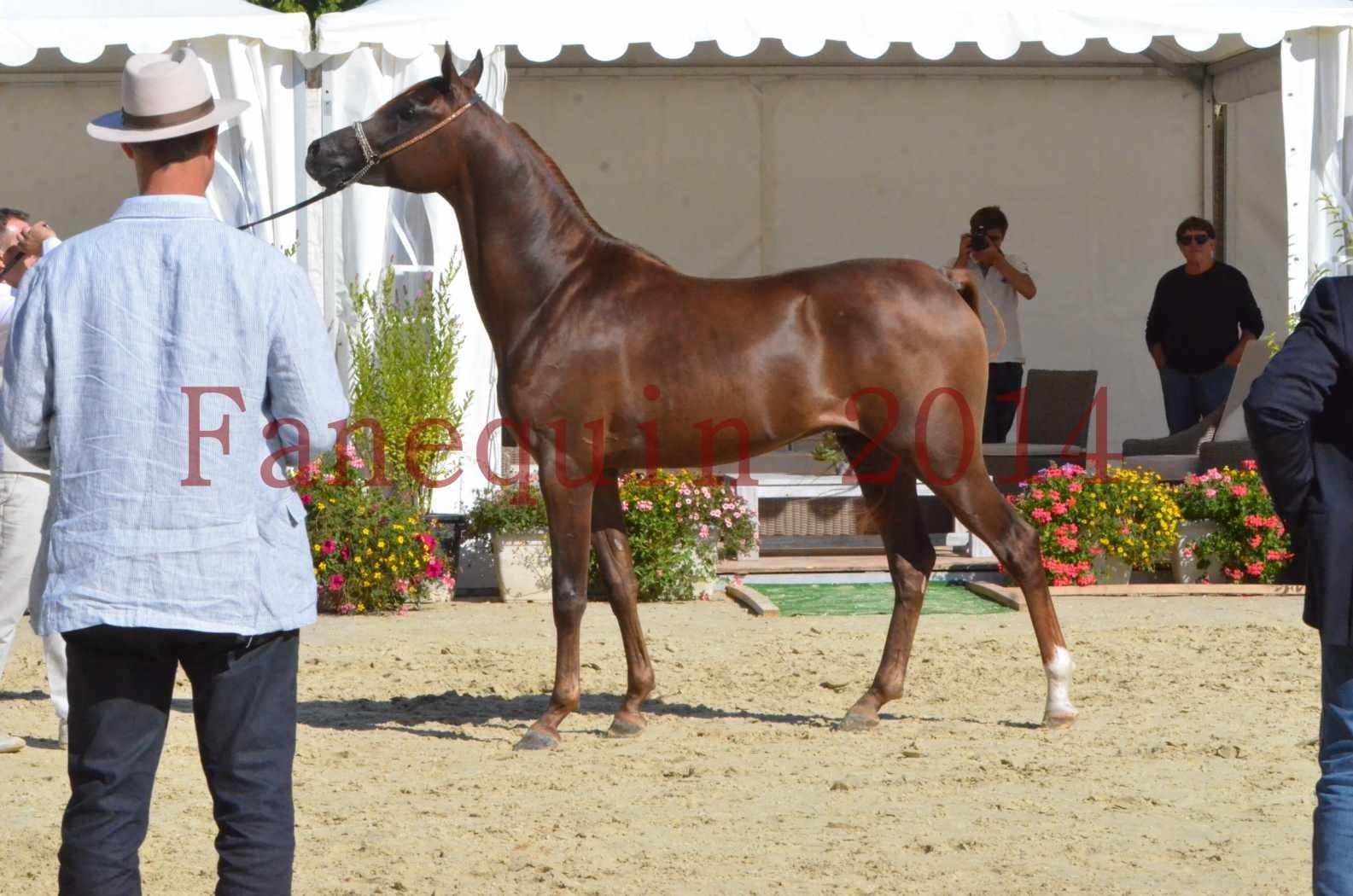 Championnat de FRANCE 2014 - Amateurs - LAMAL - 66