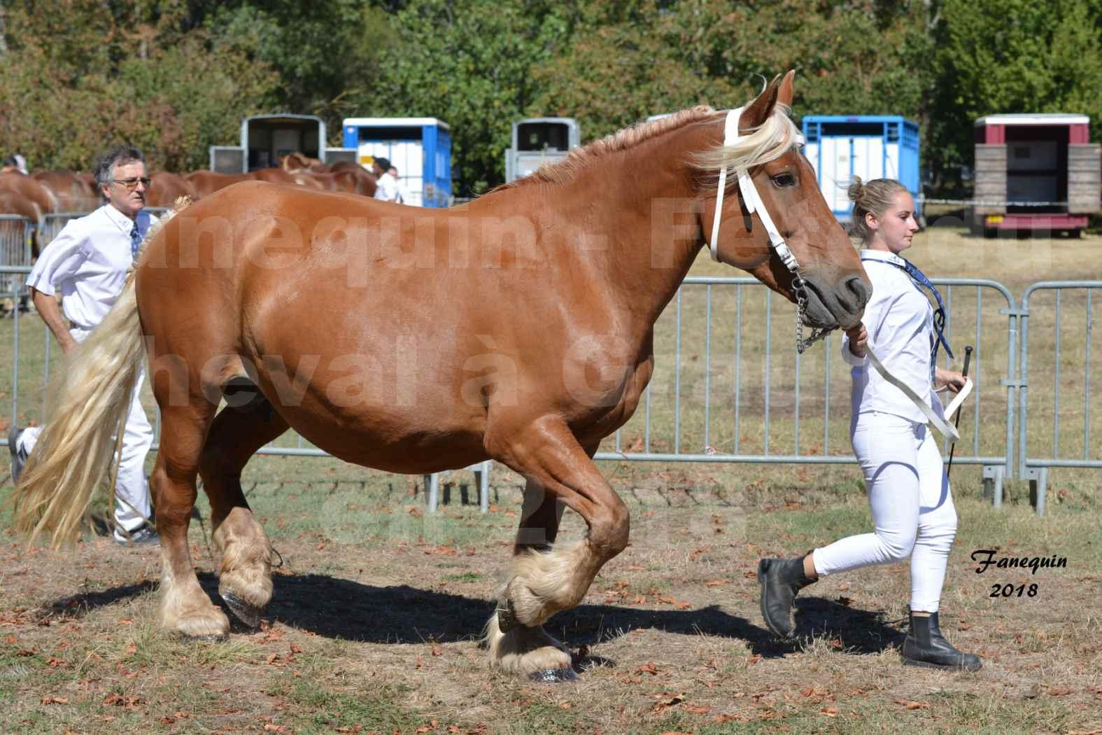 Fête du cheval à GRAULHET le 16 septembre 2018 - Concours Départemental de chevaux de traits - 40