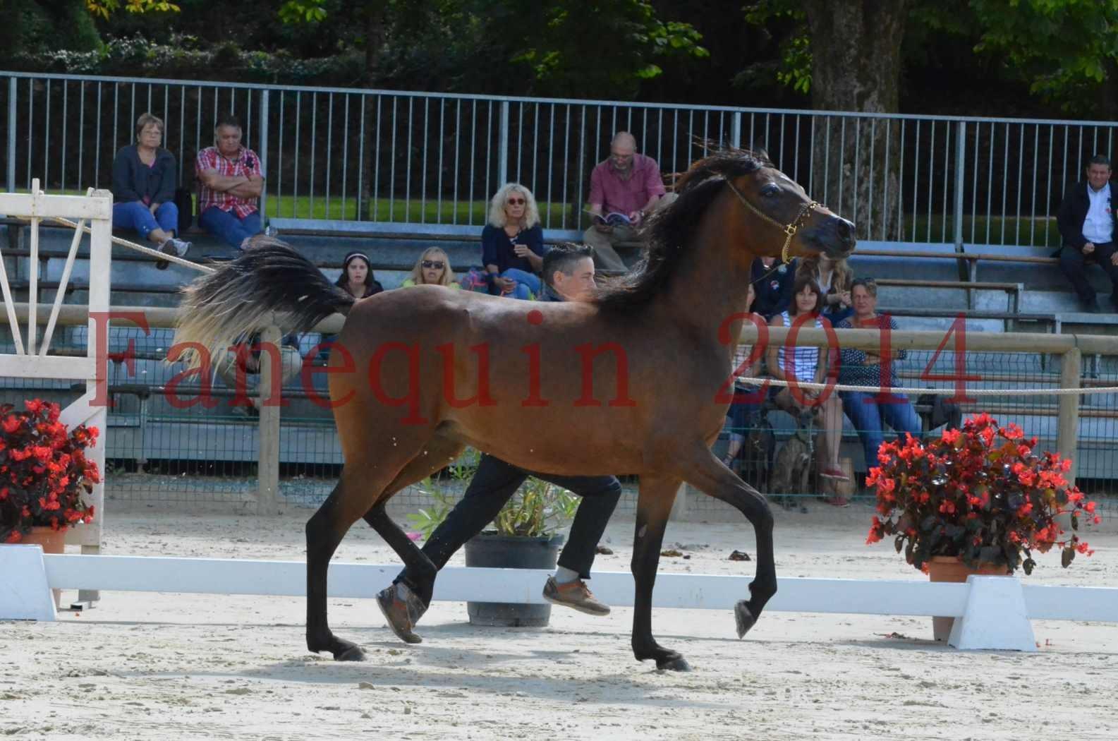 Championnat de FRANCE 2014 - Amateurs - KAL'ELLE D'ELHORIA - 45
