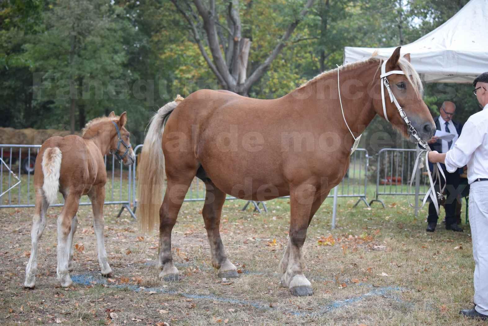Concours Régional de chevaux de traits en 2017 - Jument & Poulain COMTOIS - ALLIANCE 3 - 01