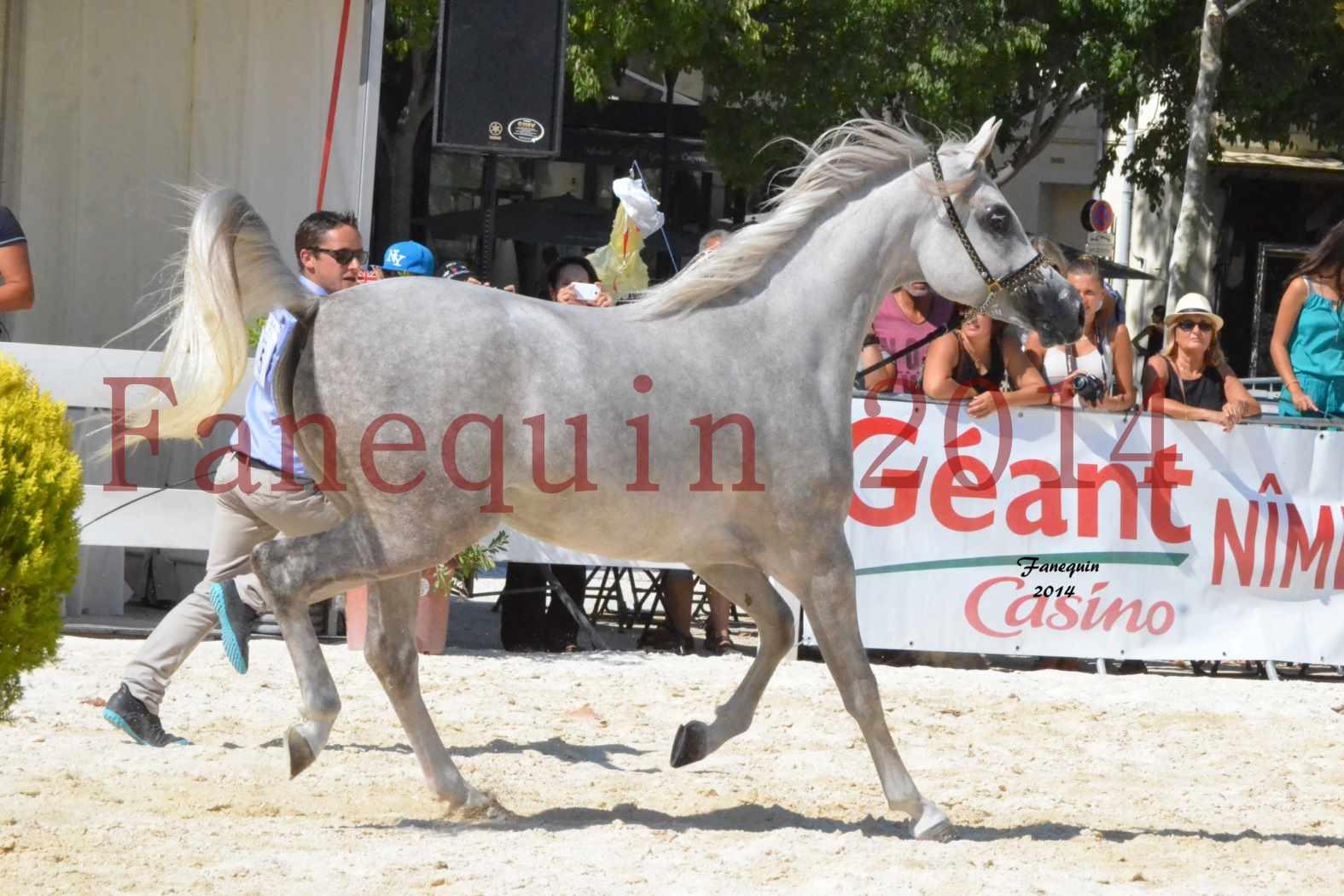 Championnat Juniors Femelles - Médaille d'ARGENT - VOLODIA DE LAFON - 06