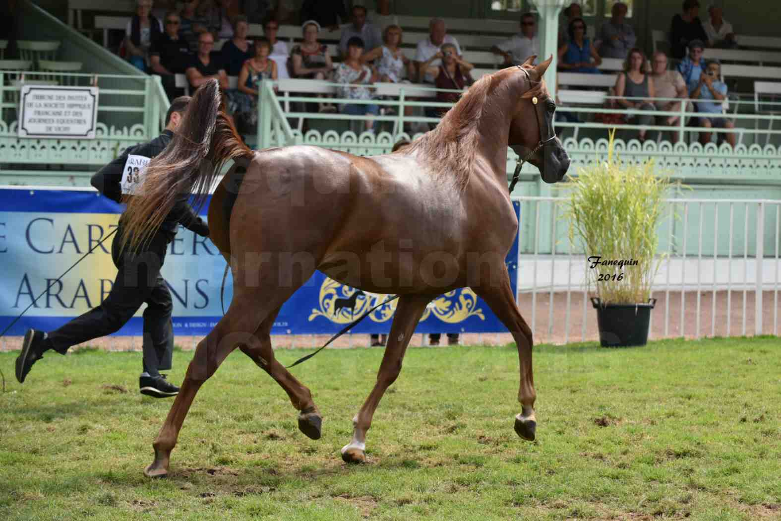International Arabian Horse Show B de VICHY 2016 - PEARL DE DJOON - Notre Sélection - 35