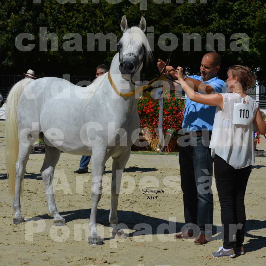 Championnat de FRANCE du cheval ARABE à POMPADOUR 2015 - Classes PROFESSIONNELS - HAADJA - 6