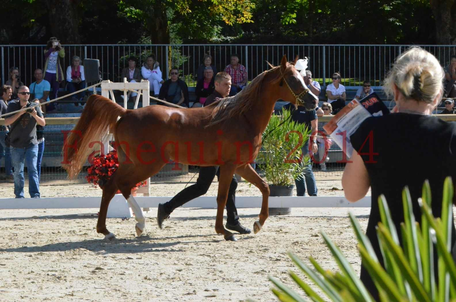 Championnat de FRANCE 2014 - Amateurs - SELECTO IBN SAMAWI - 004