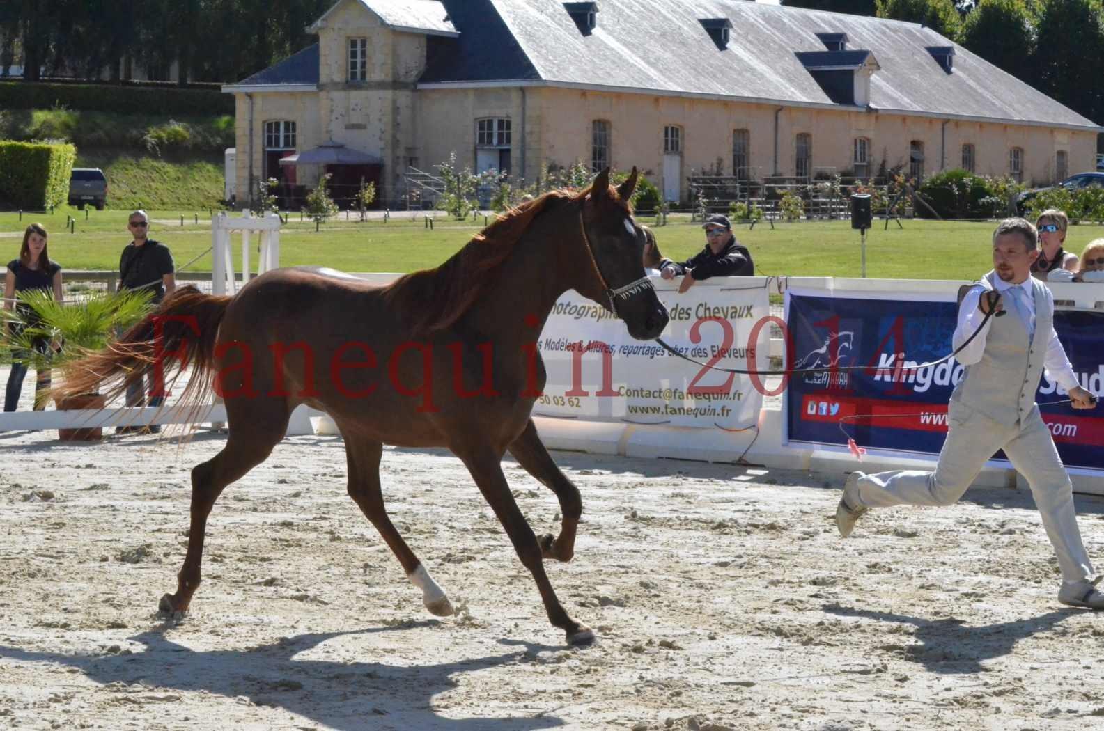 Championnat de FRANCE 2014 - Amateurs - LAMAL - 38