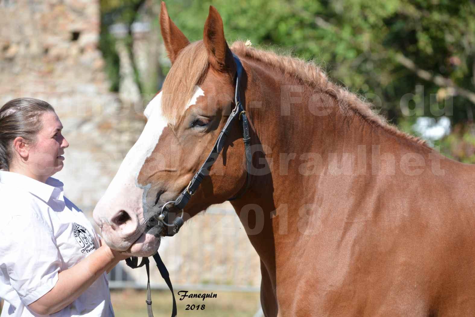 Fête du cheval à GRAULHET le 16 septembre 2018 - Concours Départemental de chevaux de traits - Portraits - 1
