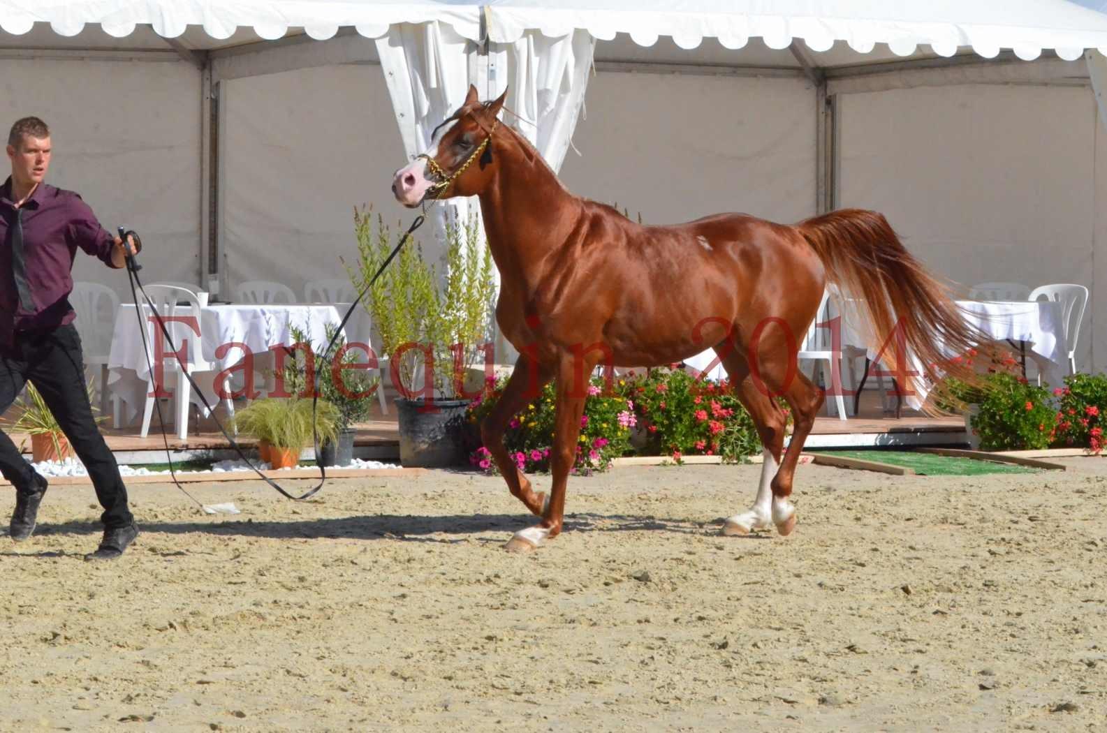 Championnat de FRANCE 2014 - Amateurs - SELECTO IBN SAMAWI - 055