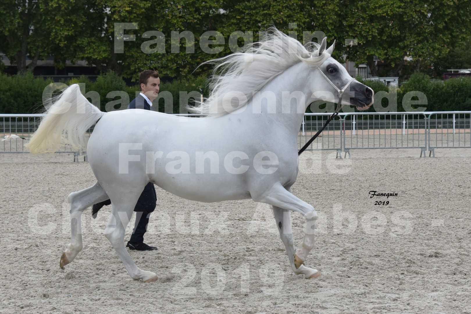 Championnat de France des chevaux Arabes en 2019 à VICHY - PIWNICIA NUNKI - 2