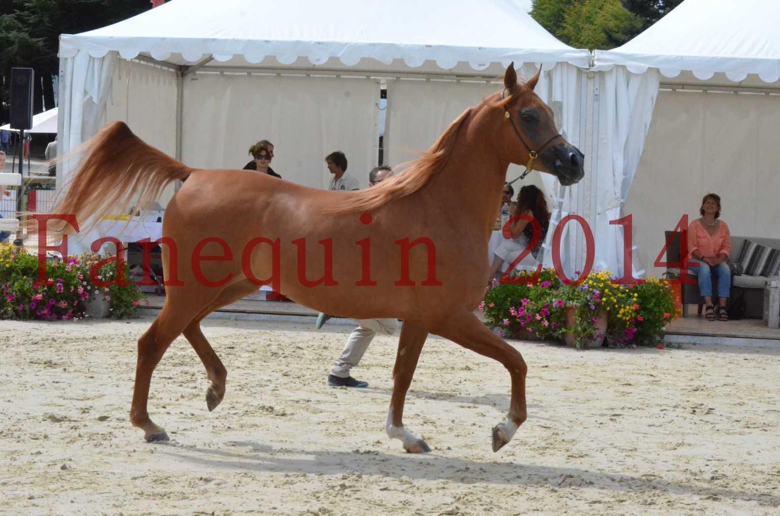 CHAMPIONNAT DE FRANCE 2014 A POMPADOUR - Championnat - LUTFINAH JA - 11