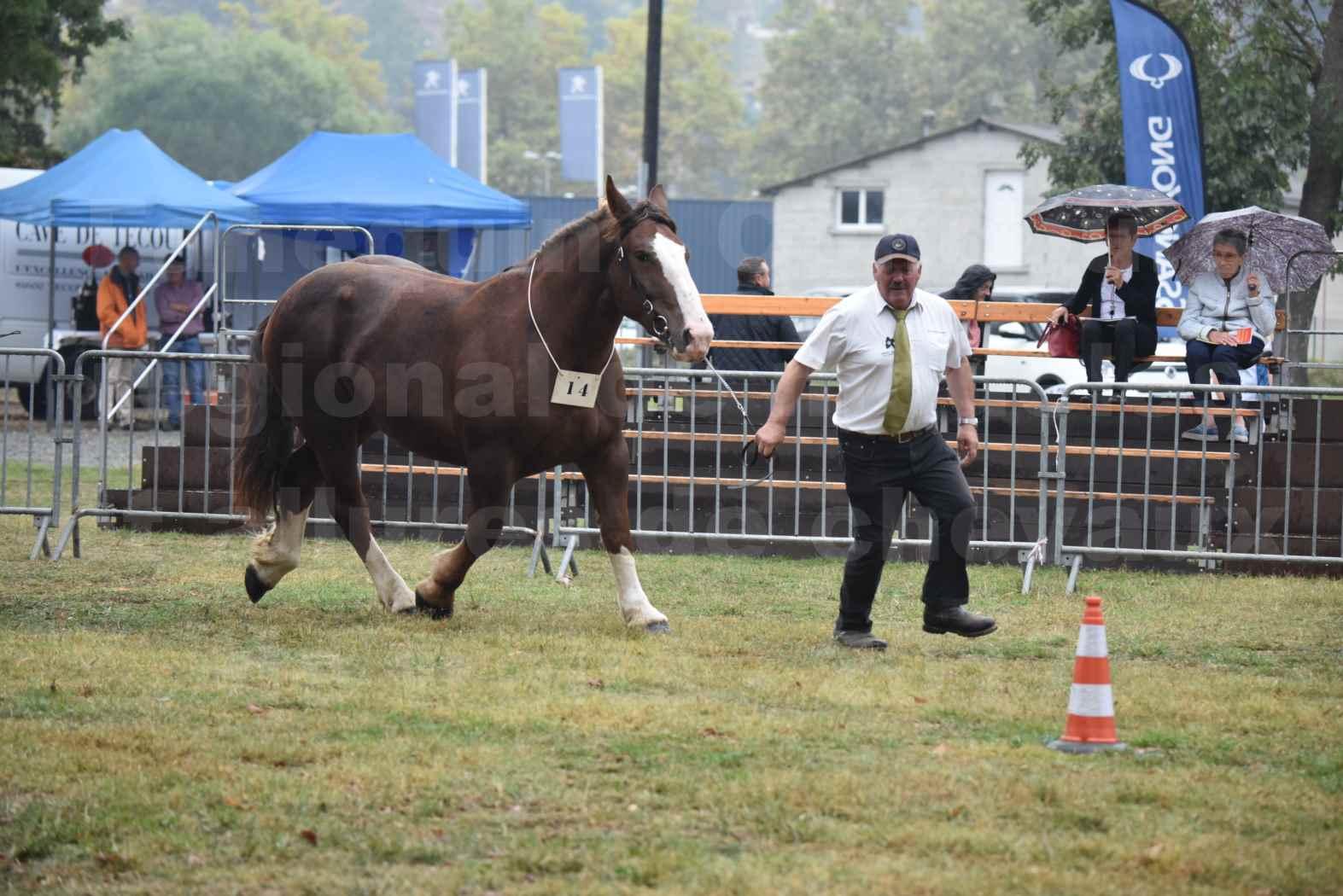 Concours Régional de chevaux de traits en 2017 - Trait BRETON - FRIVOLE DU JAUDY - 09