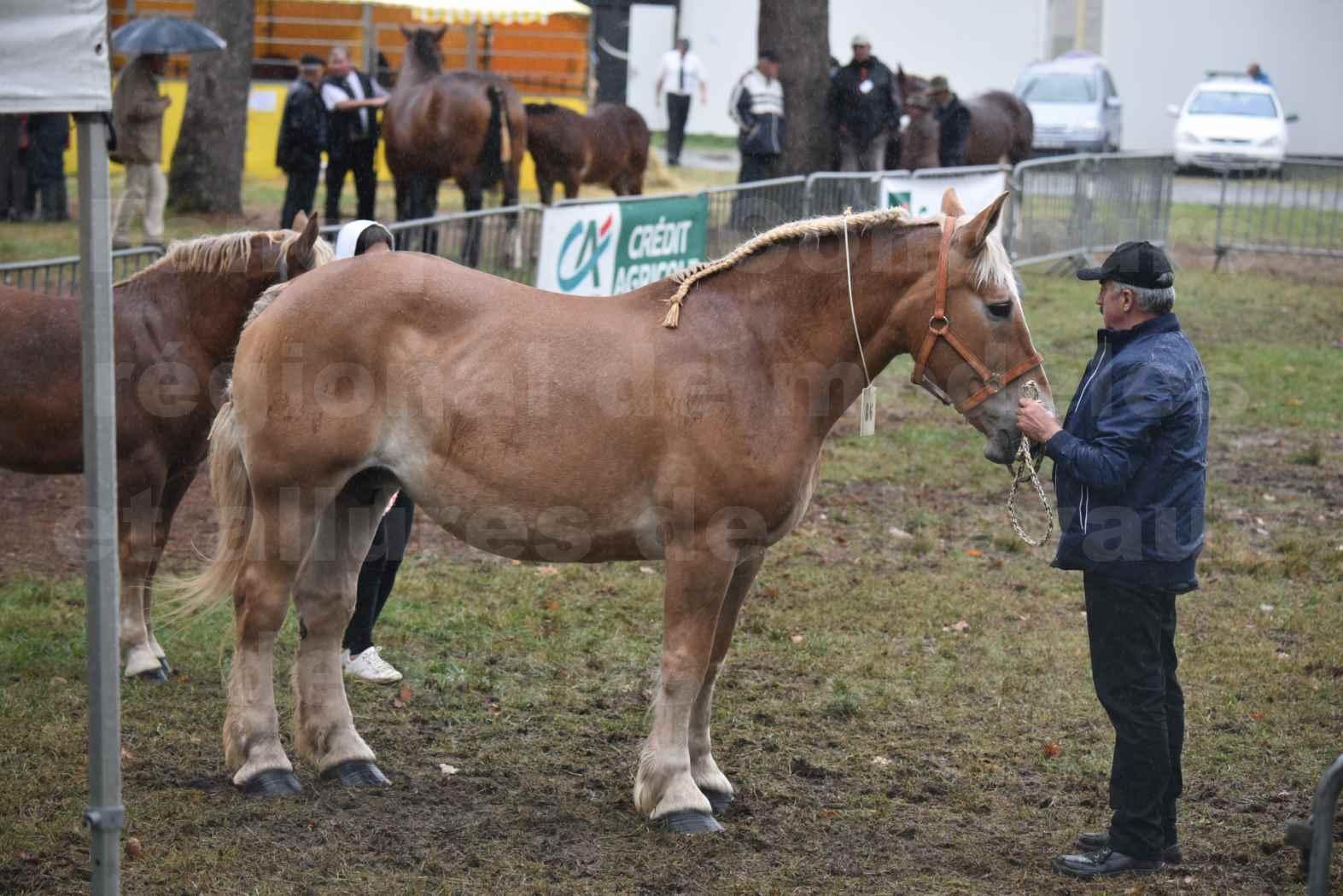 Concours Régional de chevaux de traits en 2017 - Trait BRETON - Jument suitée - OREE DES AMOUROUX - 04