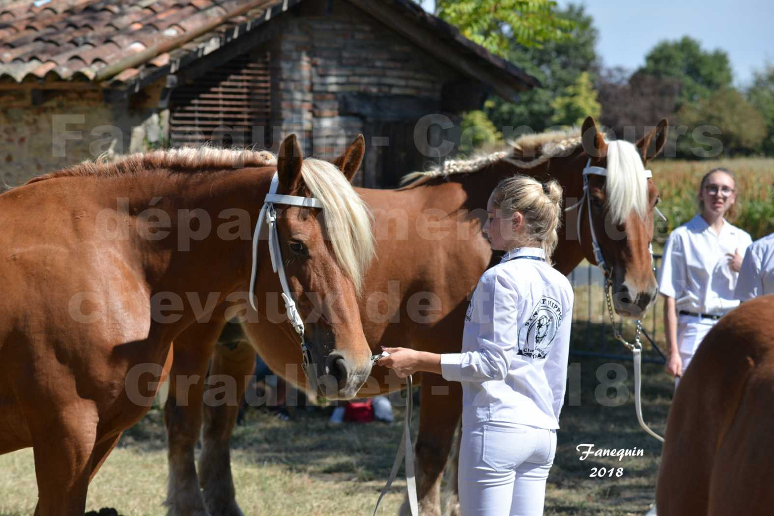 Concours départemental de chevaux de traits à GRAULHET en 2018 - Elevage POUJADE - Notre Sélection - 01