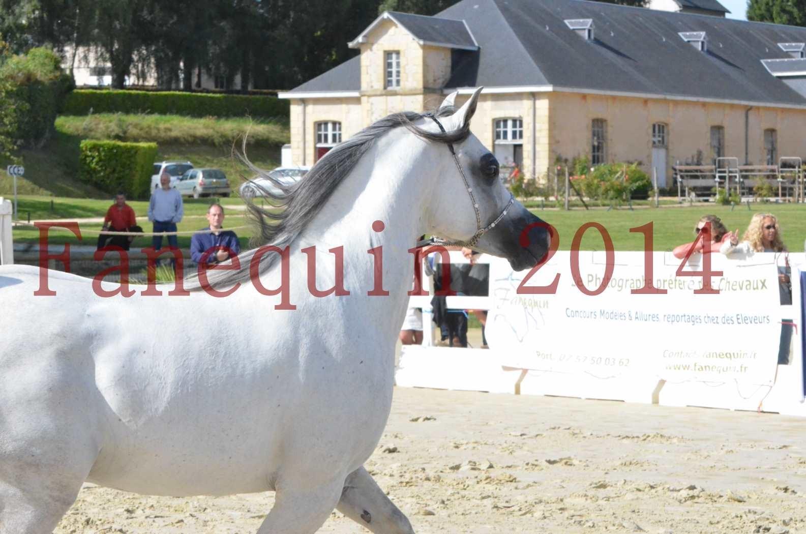 CHAMPIONNAT DE FRANCE  2014 A POMPADOUR - Sélection - SHAOLIN DE NEDJAIA - 47