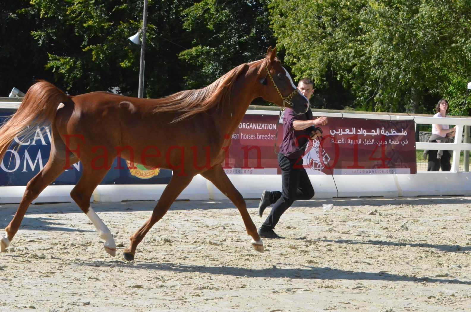 Championnat de FRANCE 2014 - Amateurs - SELECTO IBN SAMAWI - 035