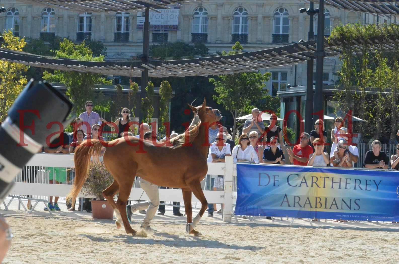 Concours National de Nîmes de chevaux ARABES 2014 - Championnat - MASSAI DE BARREL - 07