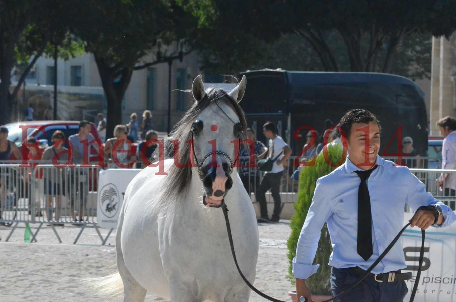 Concours National de Nîmes de chevaux ARABES 2014 - Championnat - SHAOLIN DE NEDJAIA - 39