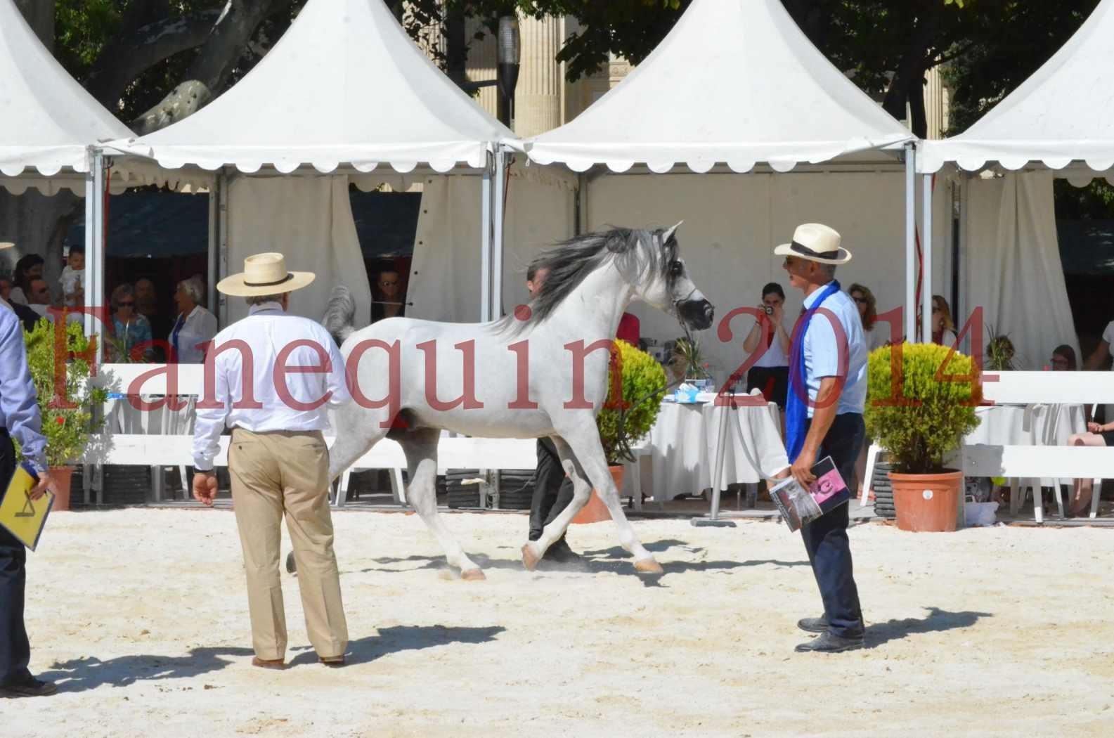 Concours National de Nîmes de chevaux ARABES 2014 - Sélection - SHAOLIN DE NEDJAIA - 67
