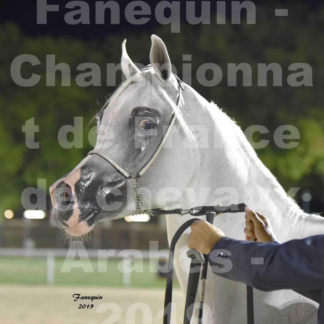 Championnat de France des chevaux Arabes en 2019 à VICHY - SHAMS EL ASHIRAF - Portraits - 6