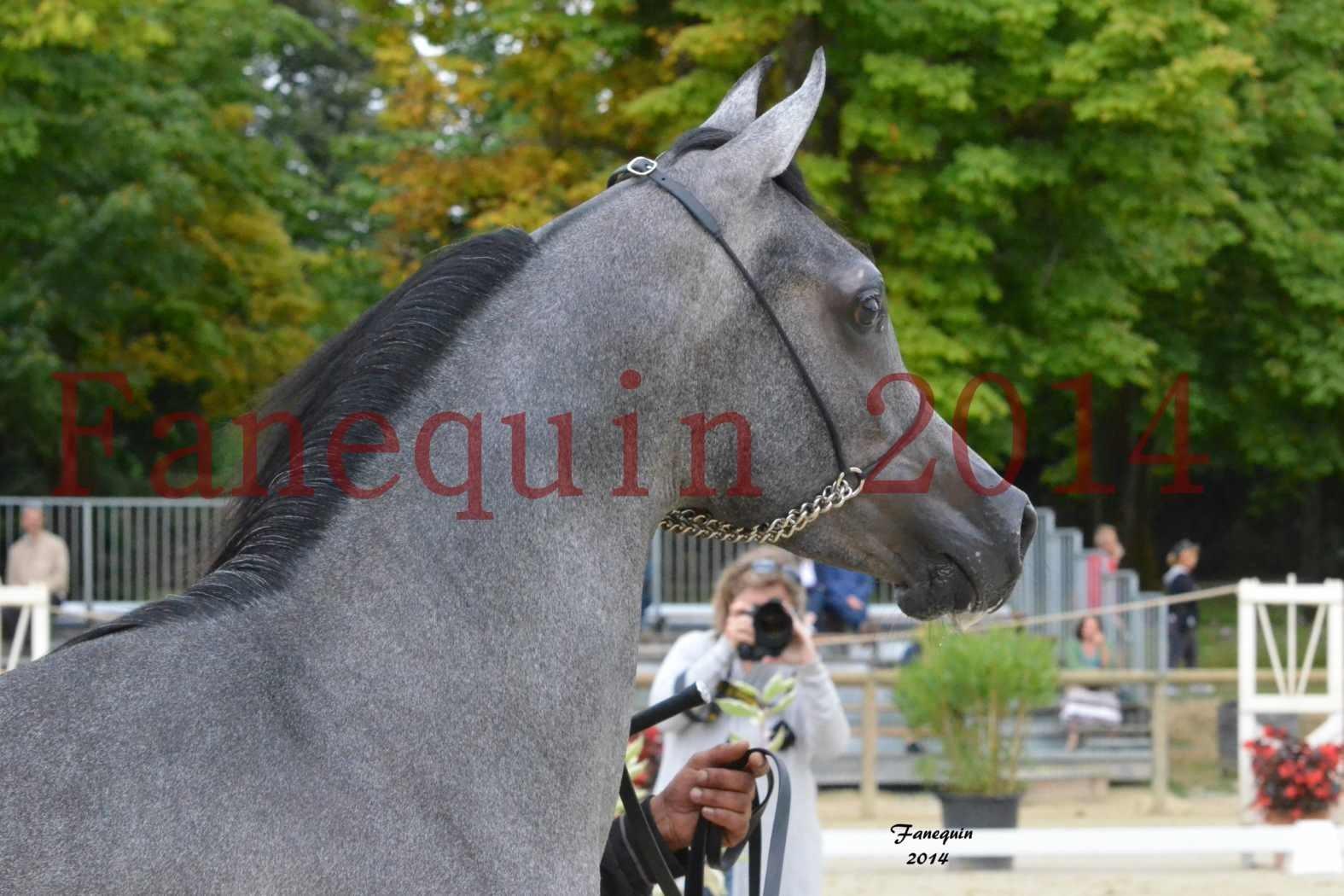 CHAMPIONNAT DE FRANCE 2014 A POMPADOUR - Notre Sélection - Portraits - AL MINYA - 3