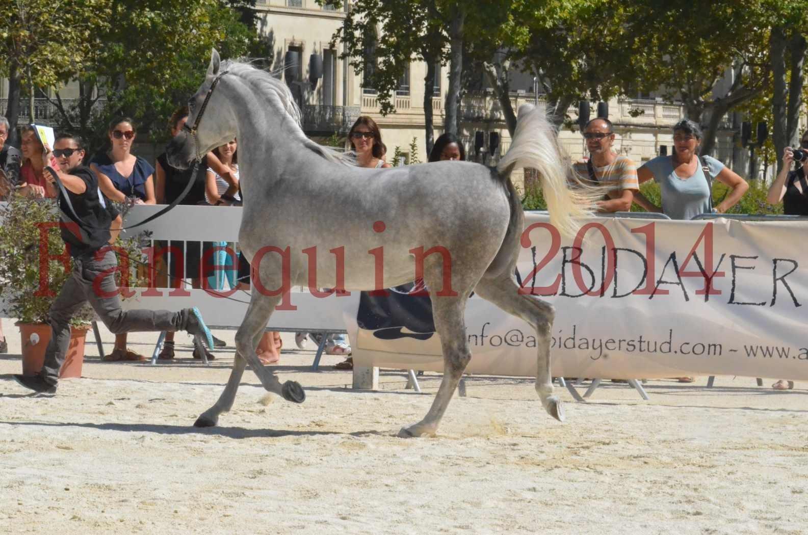 Concours national de Nîmes 2014 - Sélection  - VOLODIA DE LAFON - 16