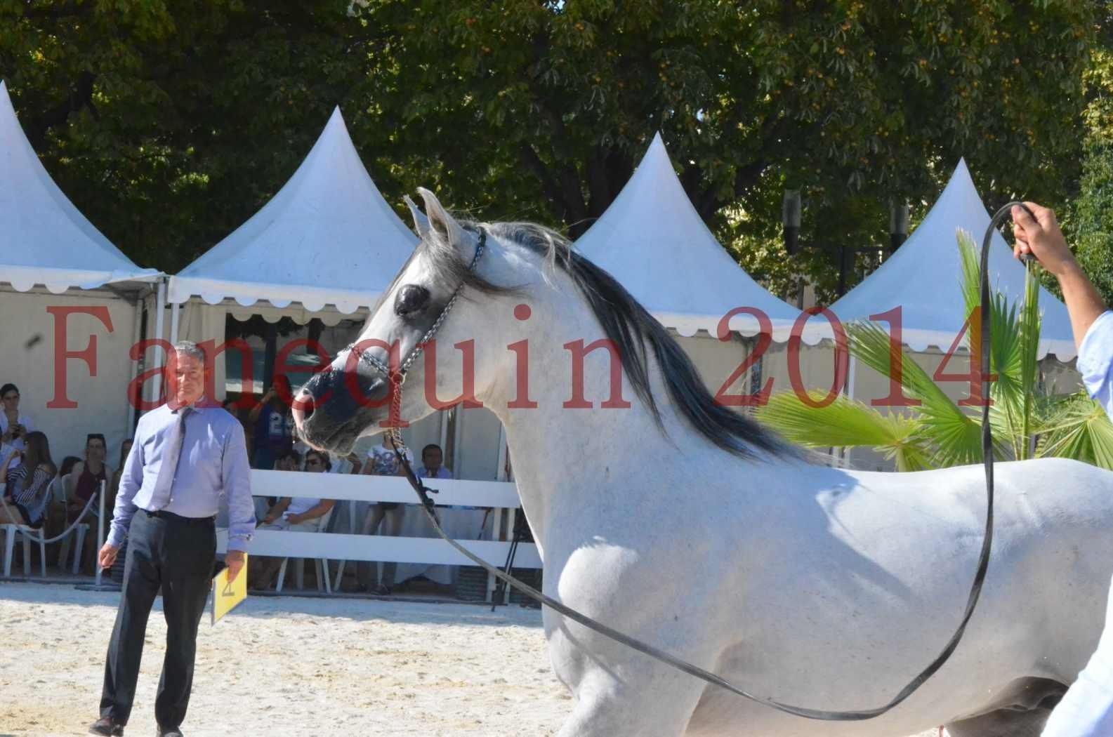 Concours National de Nîmes de chevaux ARABES 2014 - Championnat - SHAOLIN DE NEDJAIA - 33
