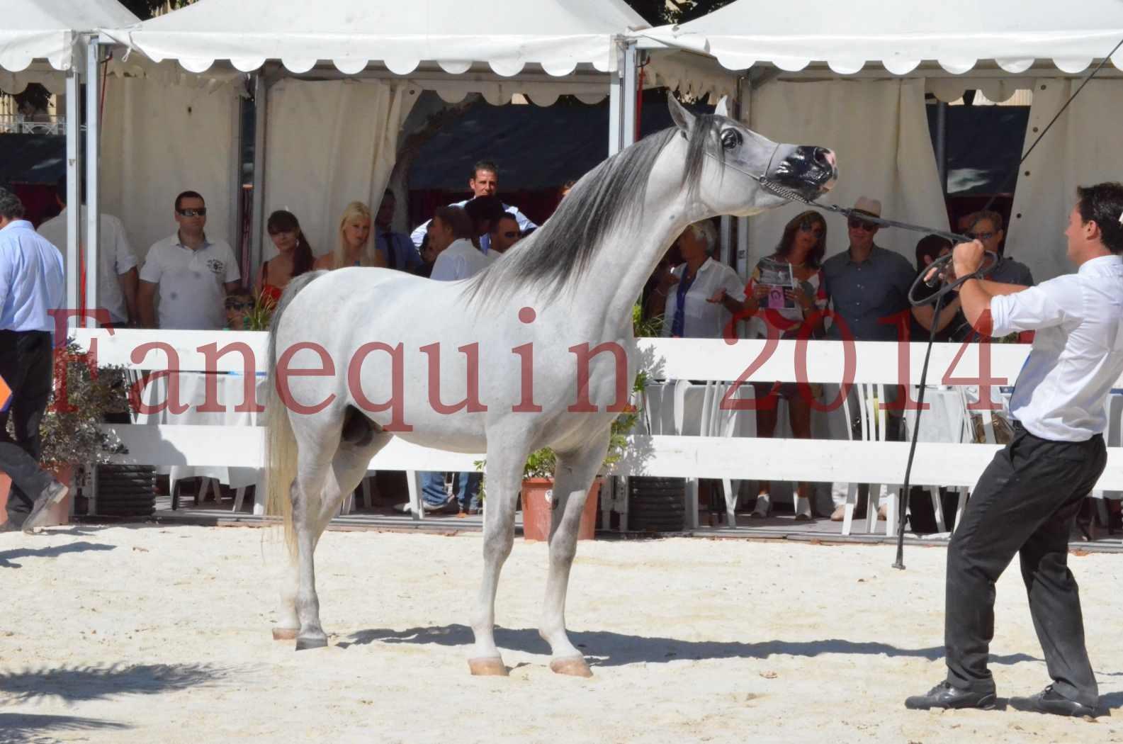 Concours National de Nîmes de chevaux ARABES 2014 - Sélection - SHAOLIN DE NEDJAIA - 81