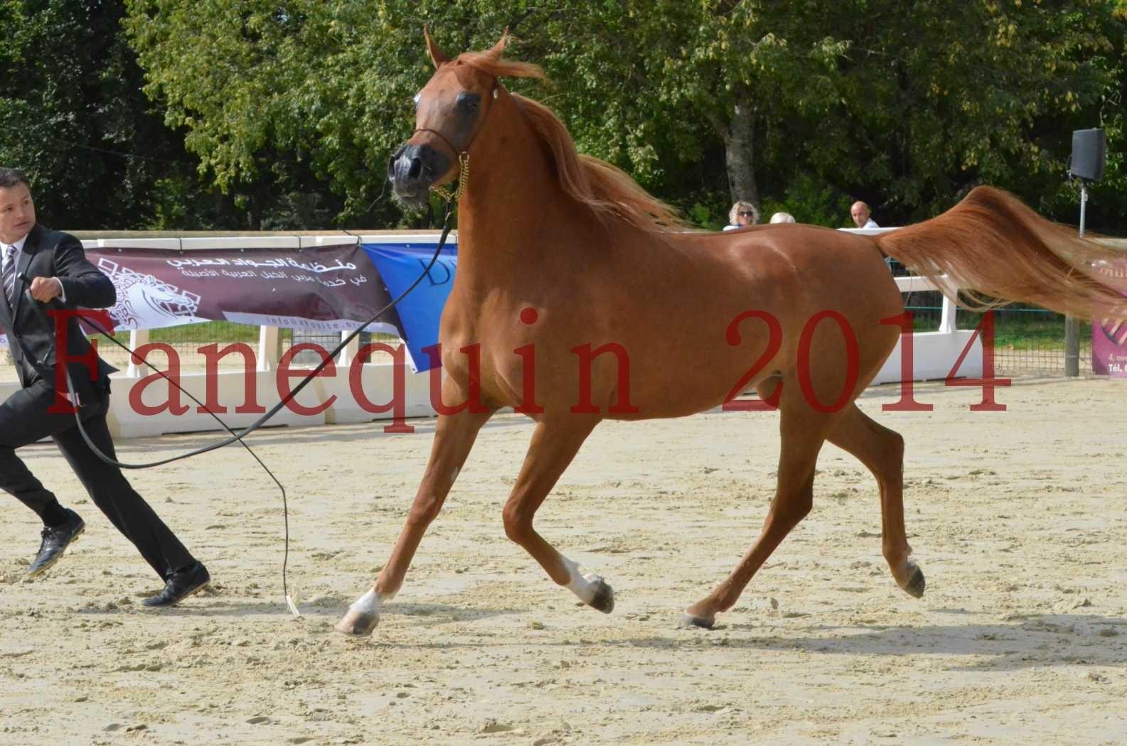CHAMPIONNAT DE FRANCE 2014 A POMPADOUR - Sélection - LUTFINAH JA - 28