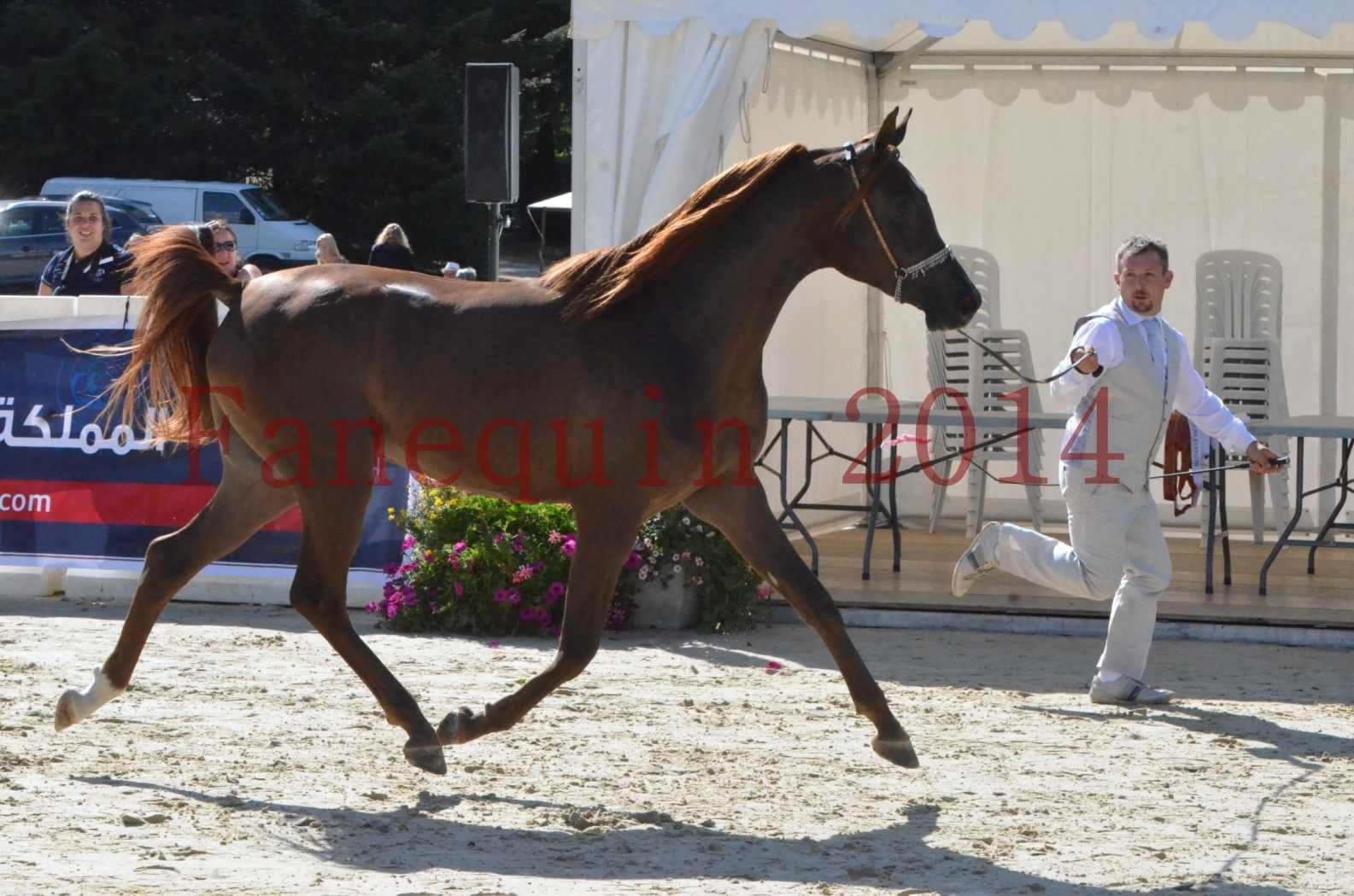 Championnat de FRANCE 2014 - Amateurs - LAMAL - 13