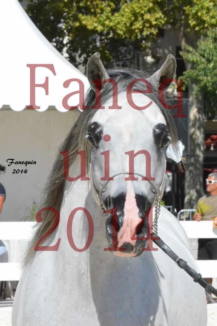 Concours National de Nîmes de chevaux ARABES 2014 - Notre Sélection - Portraits - SHAOLIN DE NEDJAIA - 01