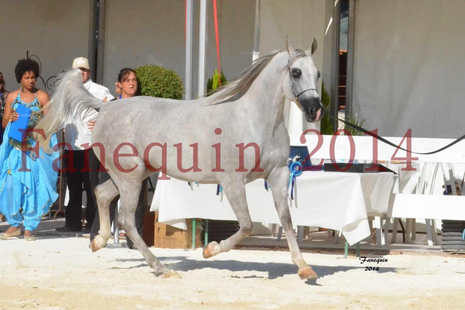 Concours National de Nîmes de chevaux ARABES 2014 - Notre Sélection - ELLESTERA - 08