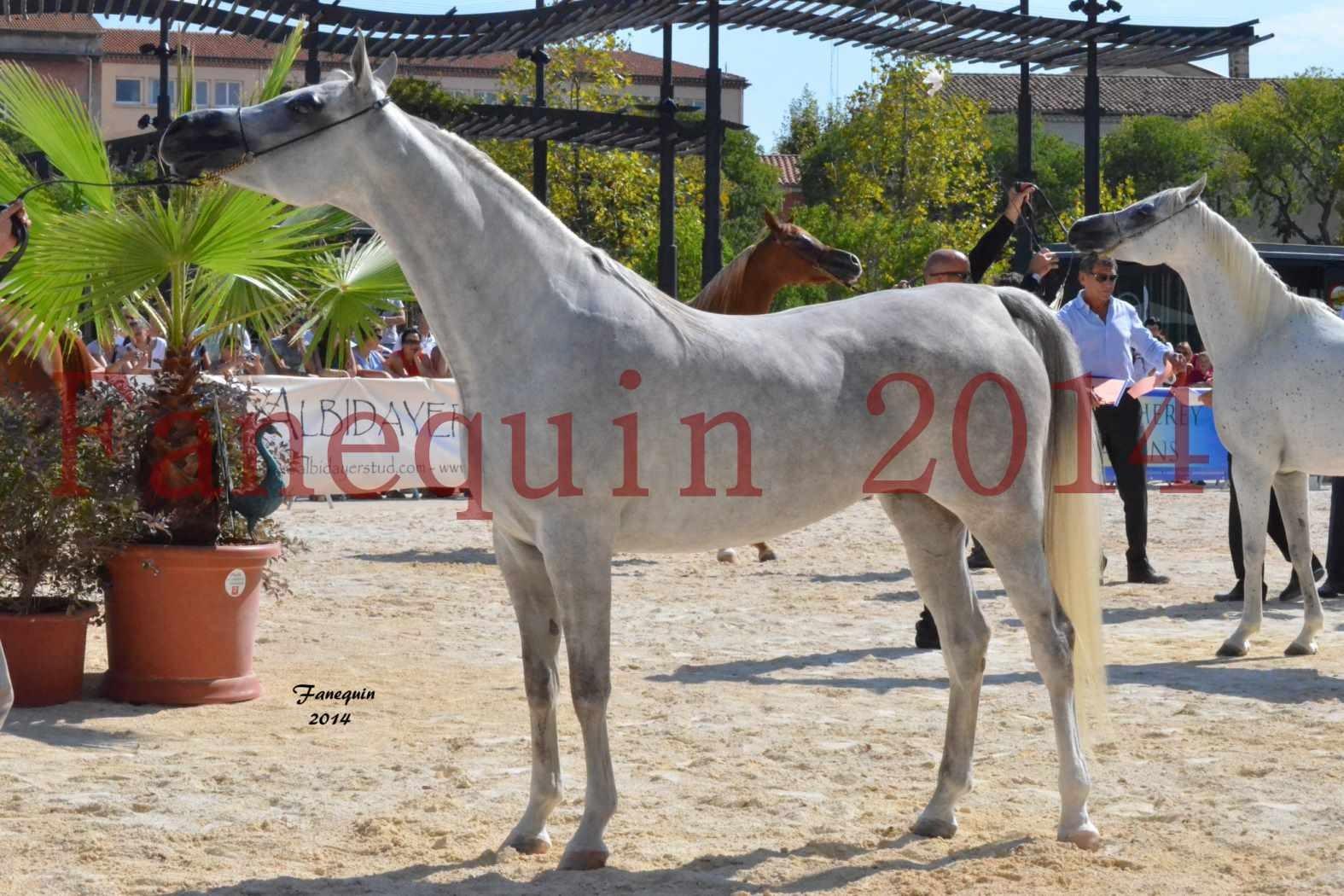 Concours National de Nîmes de chevaux ARABES 2014 - Notre Sélection - ELLESTERA - 04