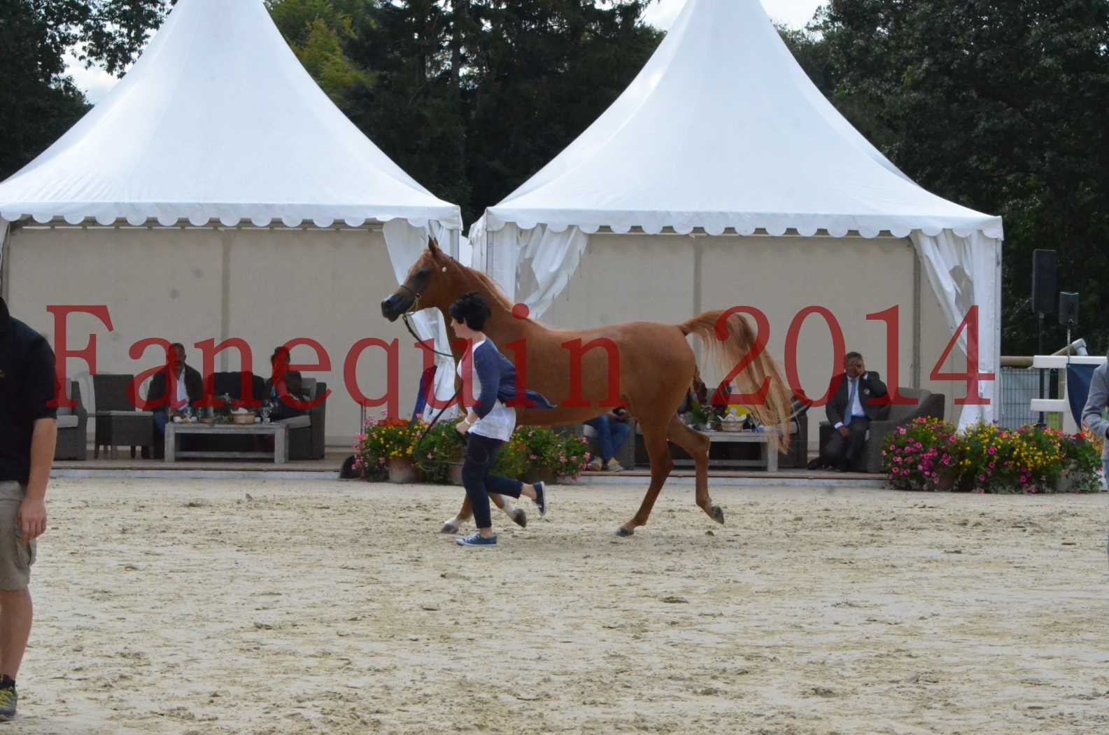 CHAMPIONNAT DE FRANCE 2014 A POMPADOUR - Sélection - LUTFINAH JA - 50
