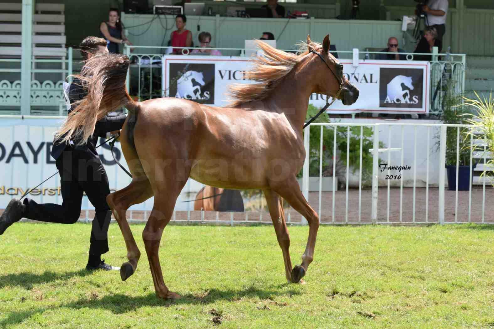 International Arabian Horse Show B de VICHY 2016 - JA FALAENE - Notre Sélection - 04