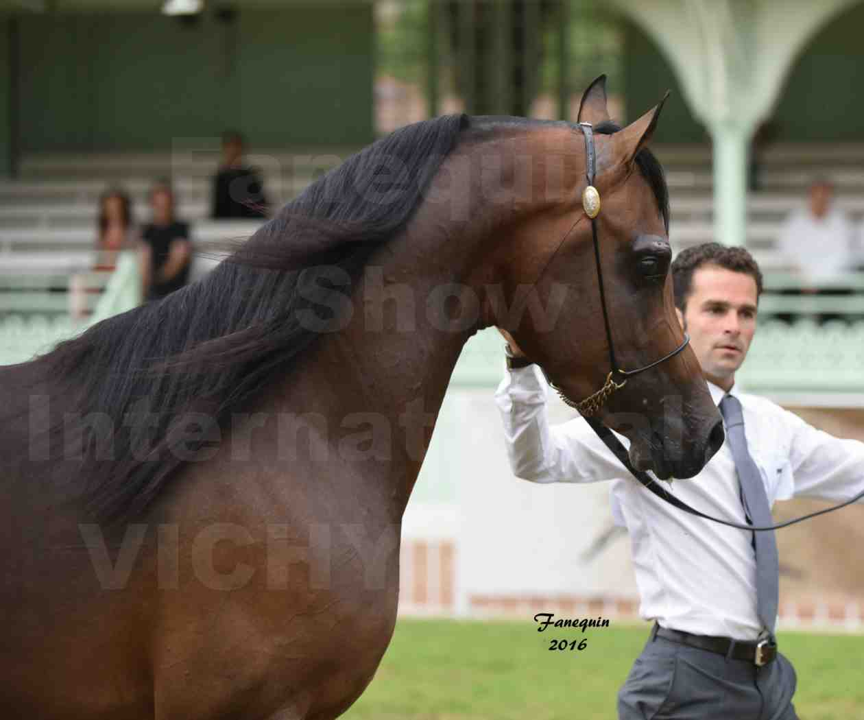 International Arabian Horse Show B de VICHY 2016 - MILLIAR - Notre Sélection - Portraits - 3