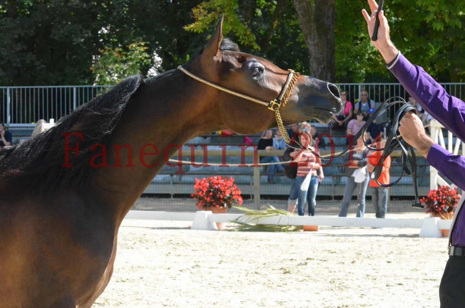 Championnat de FRANCE 2014 - Amateurs - SH FARAJAA - 49